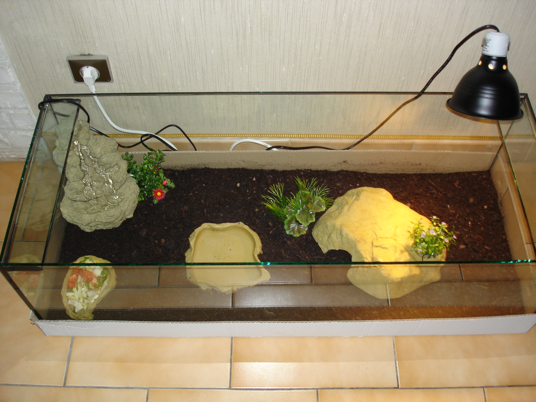 amenager un terrarium pour tortue terrestre. Black Bedroom Furniture Sets. Home Design Ideas